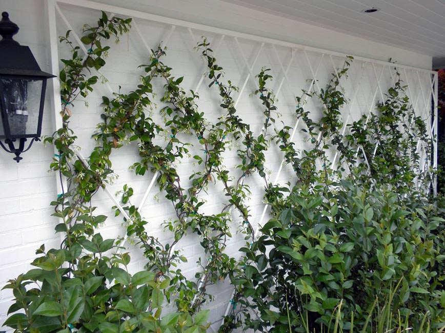 Plant vines on a trellis to protect blank walls